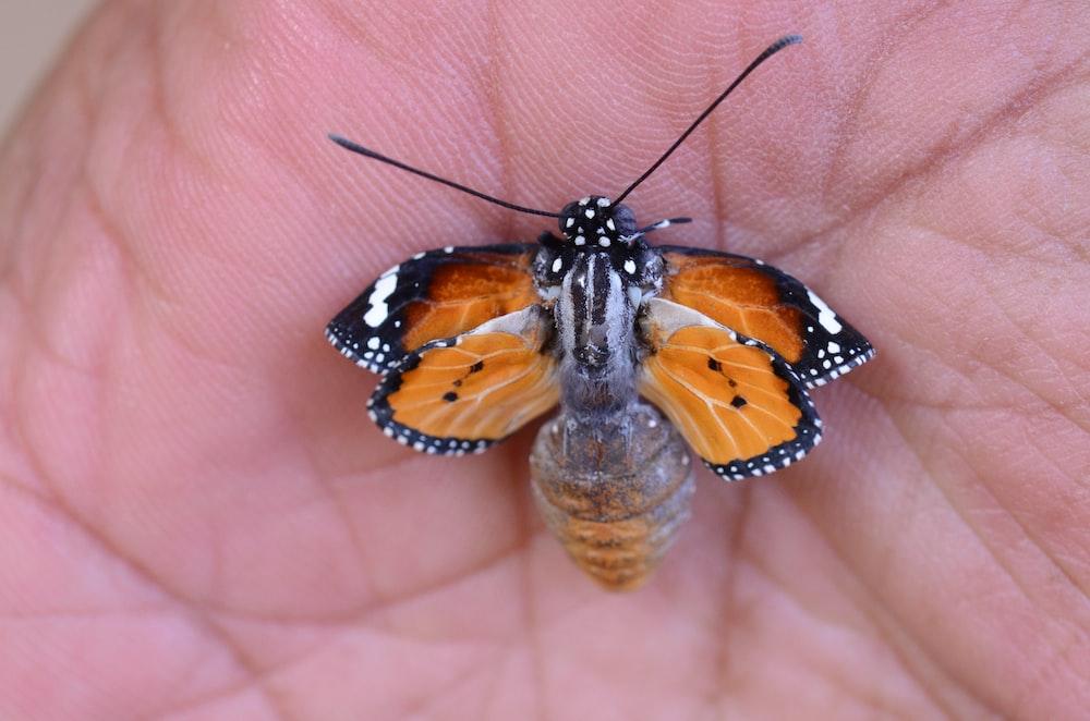 butterfly on human skin
