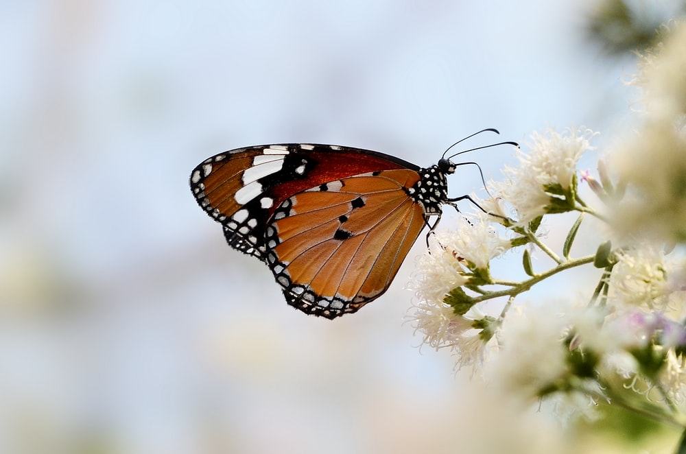 brown and white butterfly on flower