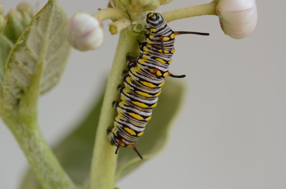 yellow and black caterpillar in a green plant close-up photography