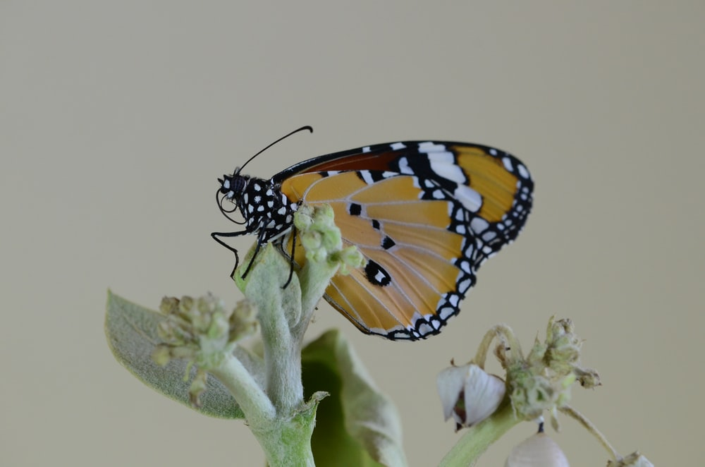 yellow, white, and brown butterfly on flower