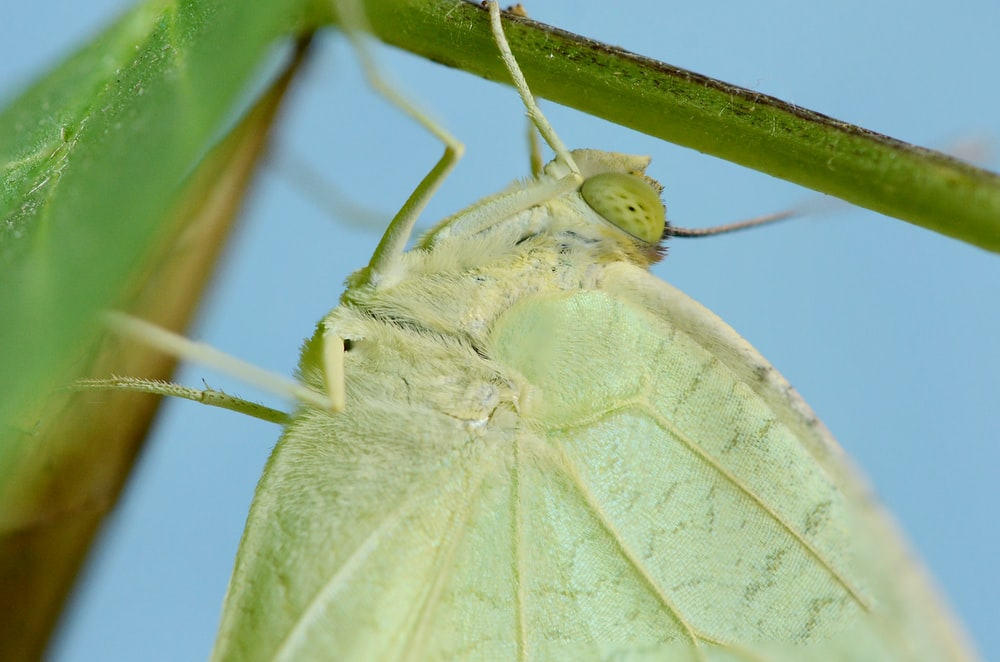 macro photography of green moth