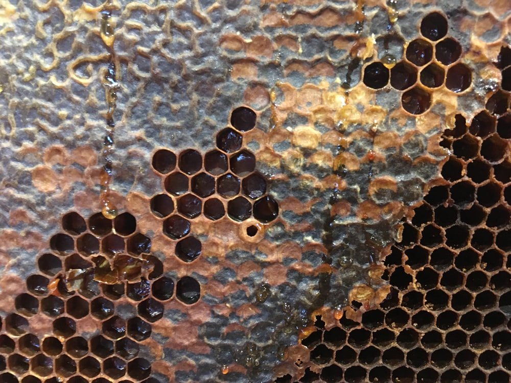 close-up photography of brown honeycomb