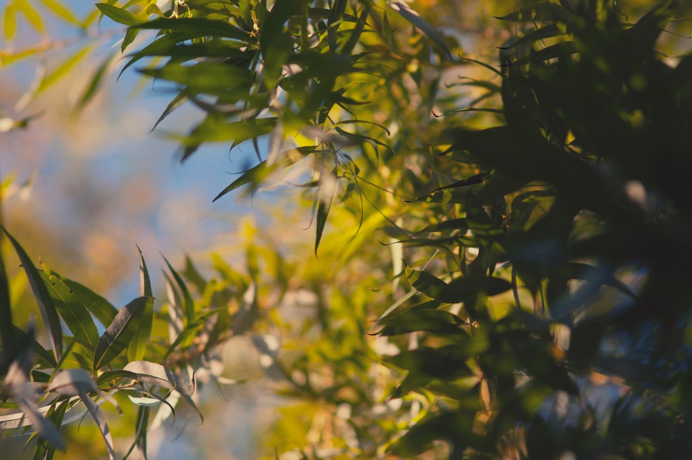selective focus photography green trees