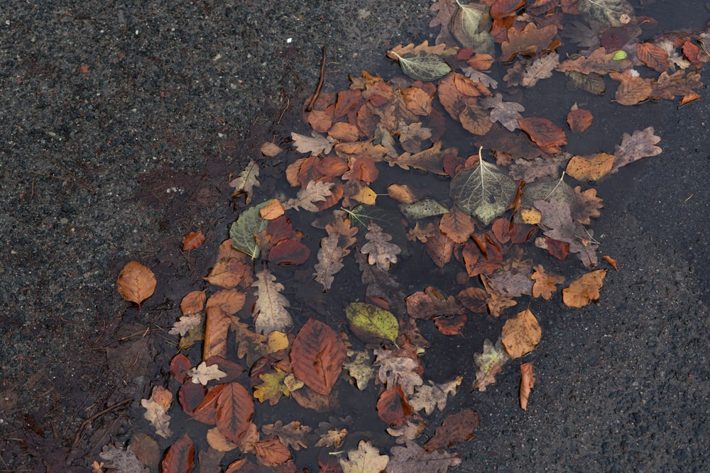 dried brown leaves on concrete pavement