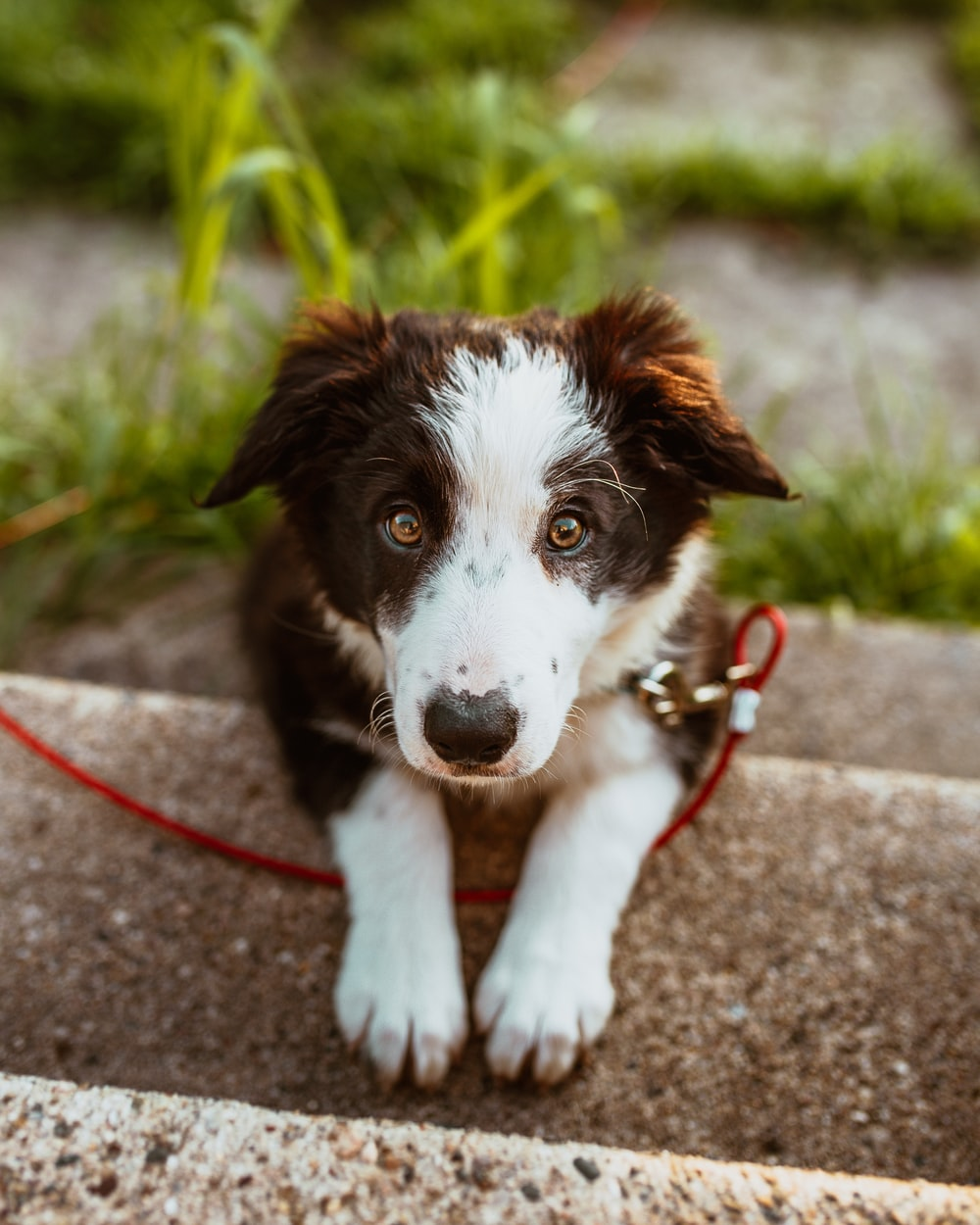 short-coated white and brown puppy on stairs