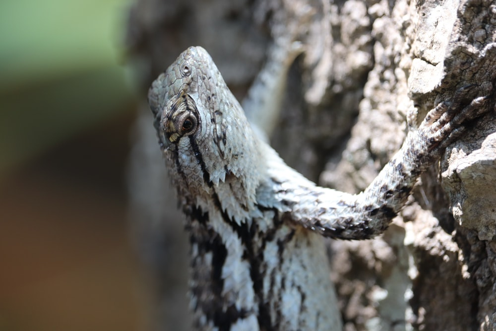 selective focus photography of white and brown reptile