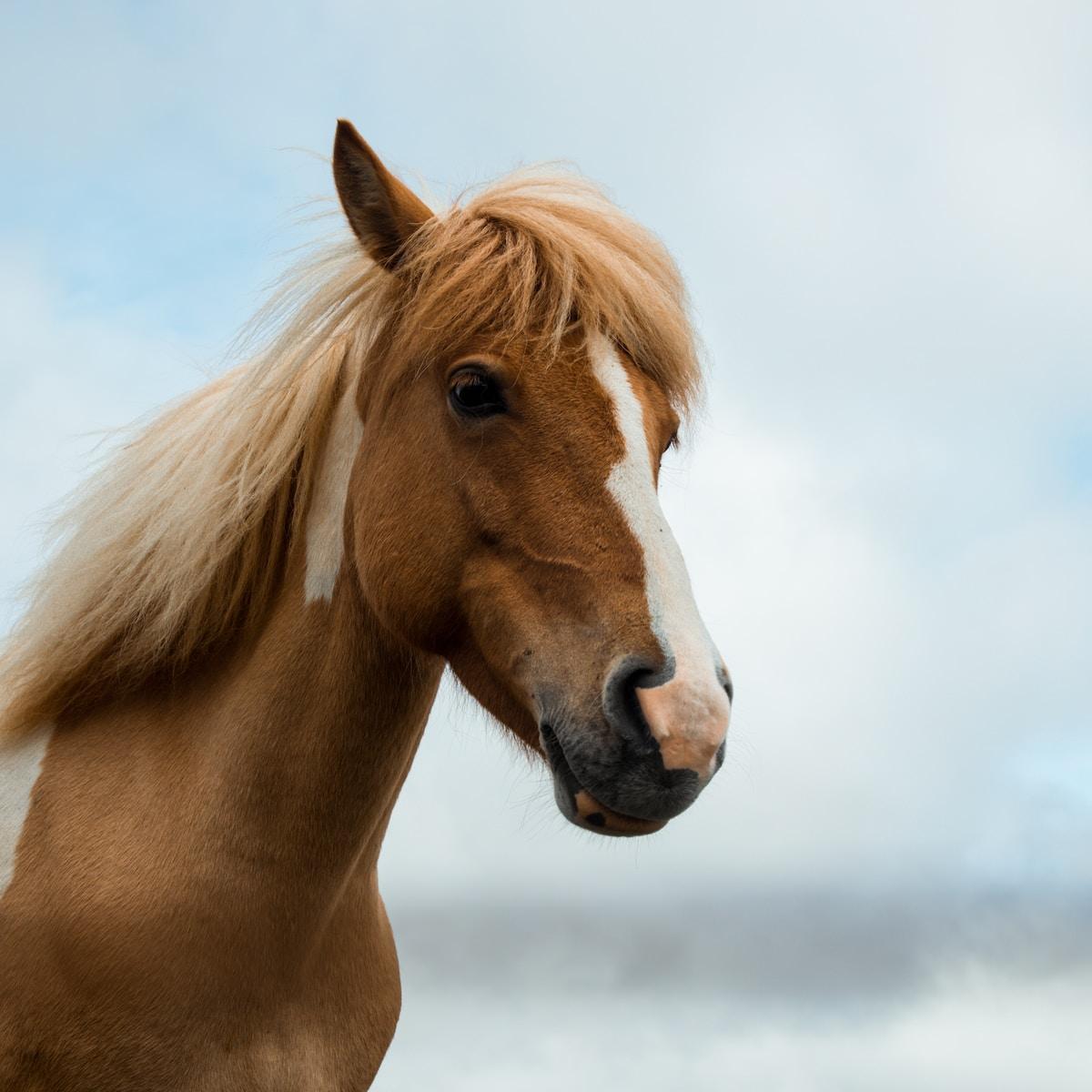 tratamiento contra el coronavirus. brown and white horse