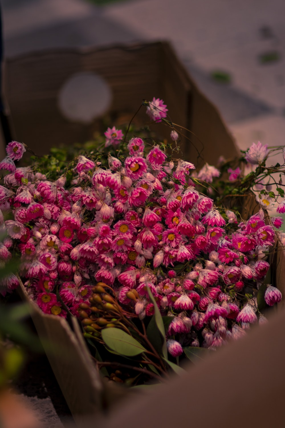 box of pink flower cluster