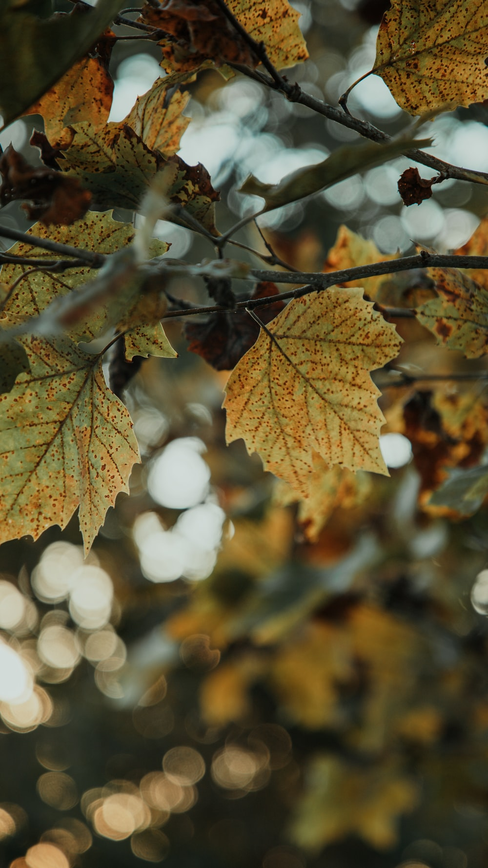 beige leafed plant