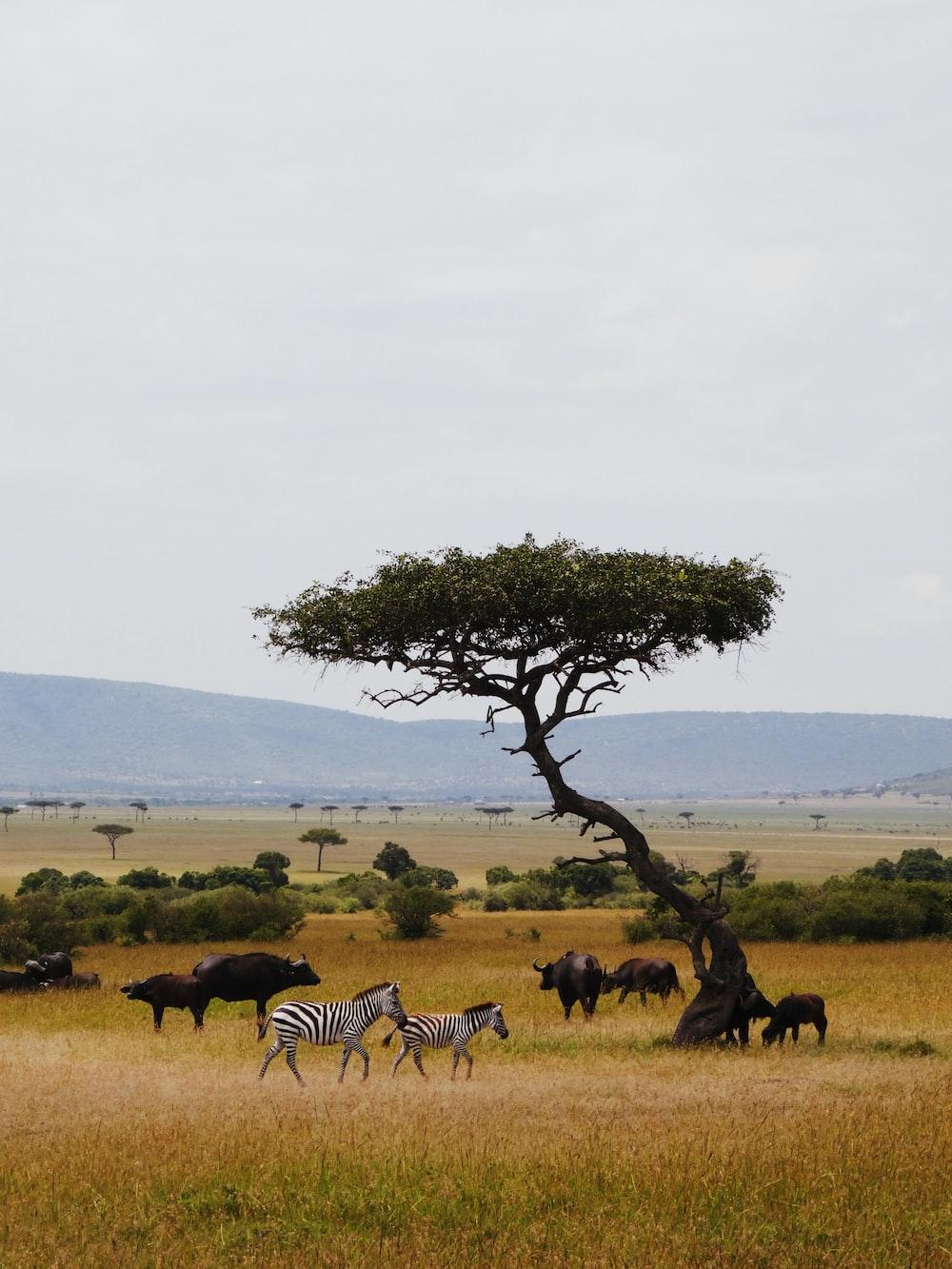 wild animals near tree