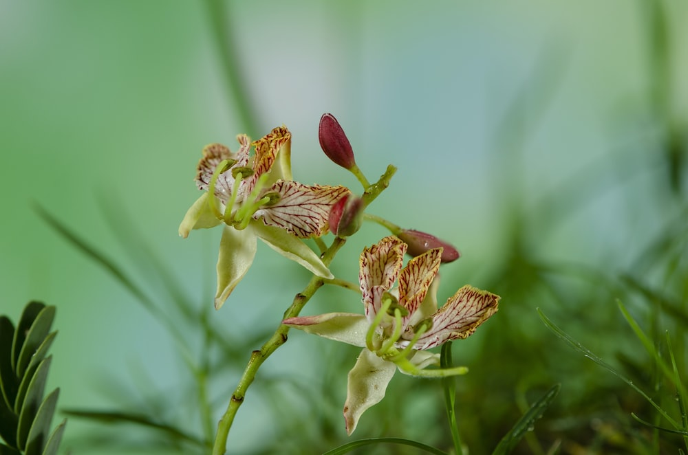 red and green orchid