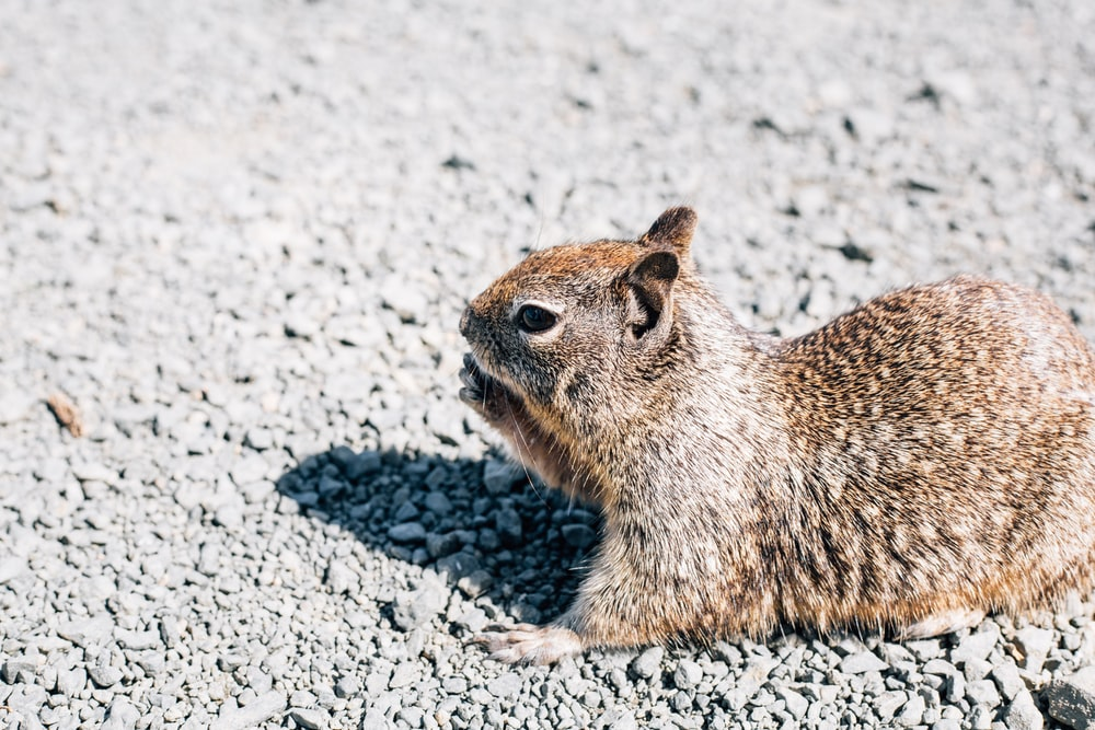 brown squirrel during daytime