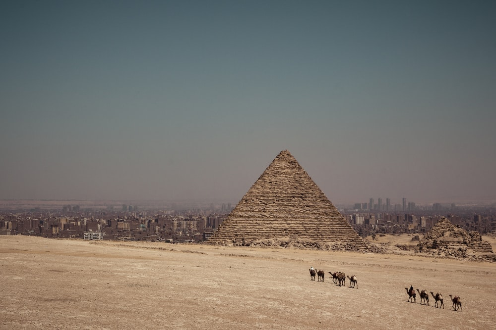 camels near Pyramid of Egypt during daytime