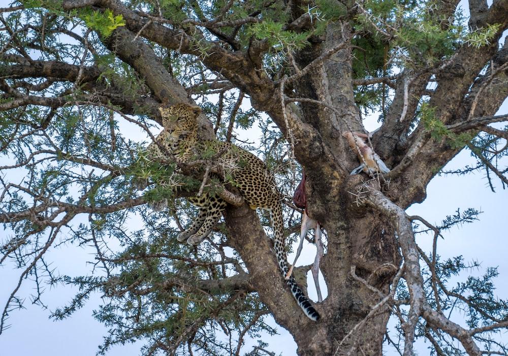 cheetah on tree during daytime
