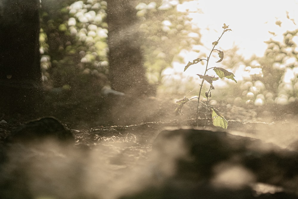 Sun Rays Coming Through Trees And Plants Photo Free Nature Image
