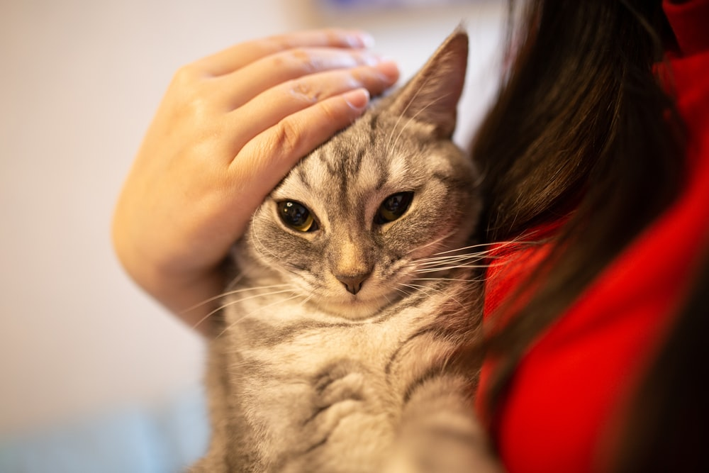 person wearing gray tabby cat