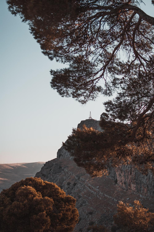 green trees viewing mountain during daytime