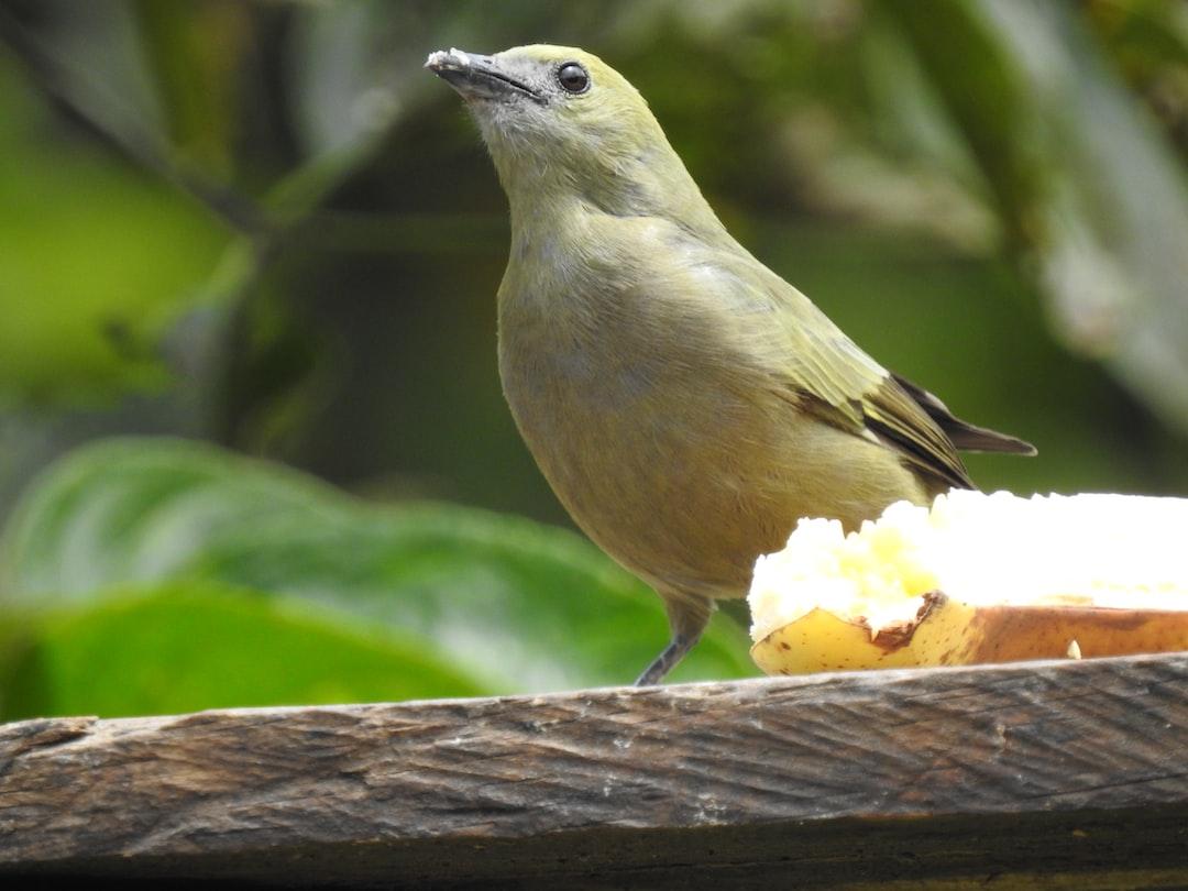 Attentive Bird / Pájaro atento