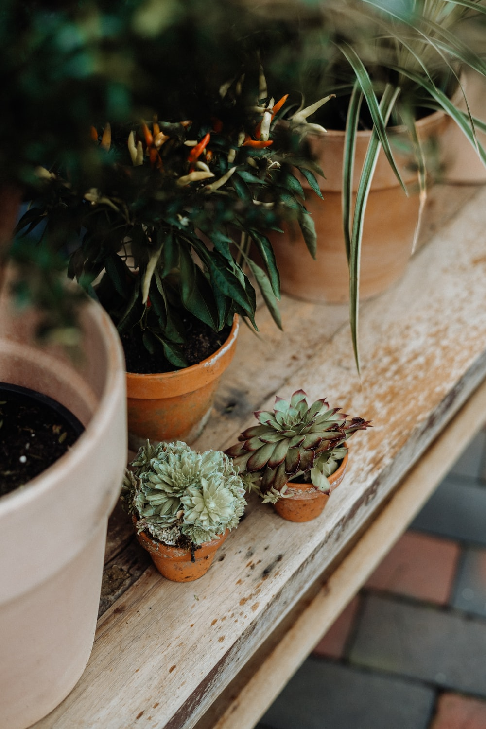 closeup photo of potted plants