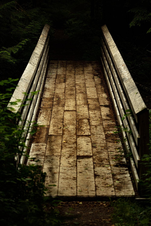 gray wooden bridge between trees