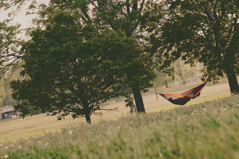 person lying down in a hammock hanging between trees