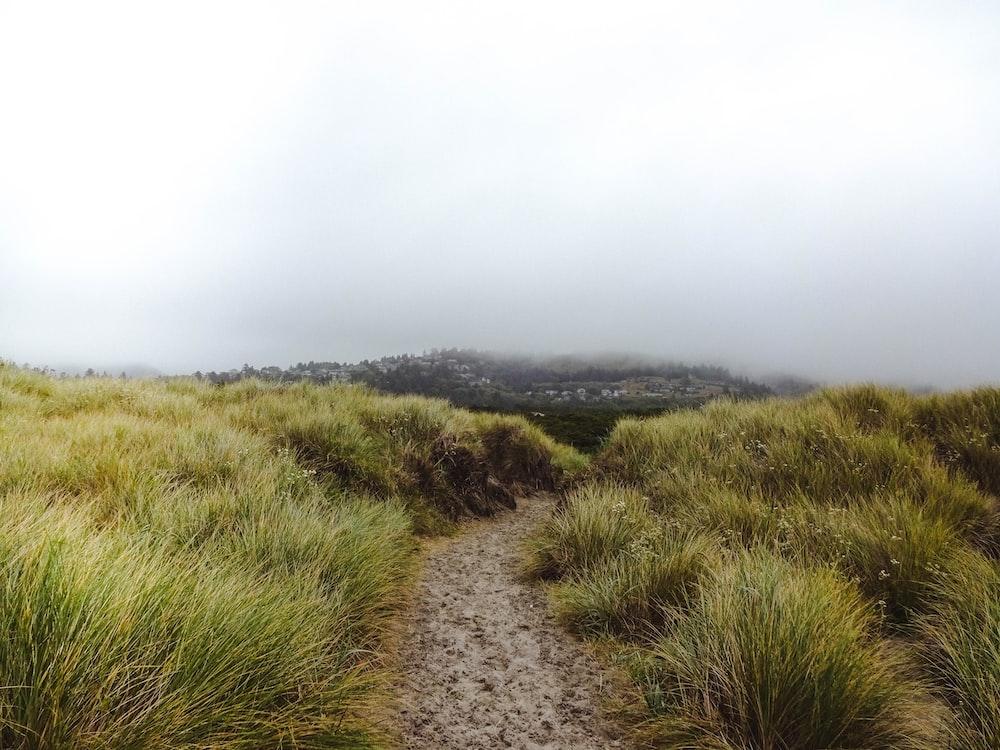 green grass filed under cloudy sky