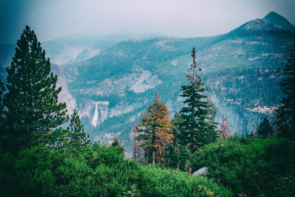trees and mountains at the distance