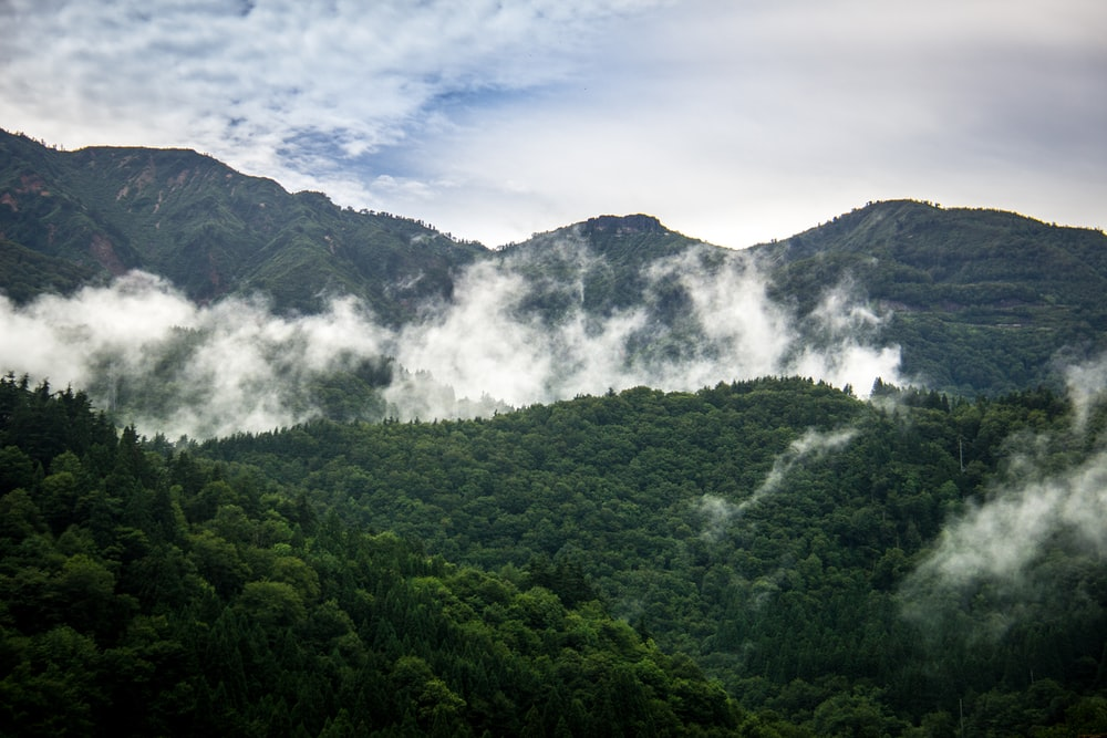green trees and mountain scneery