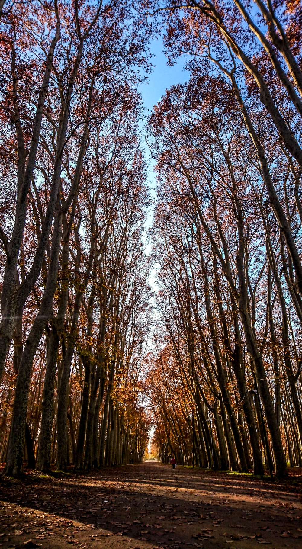 forest pathways photo