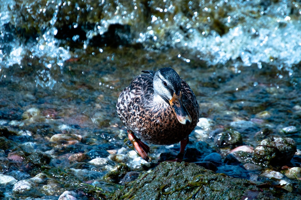closeup photo of duck