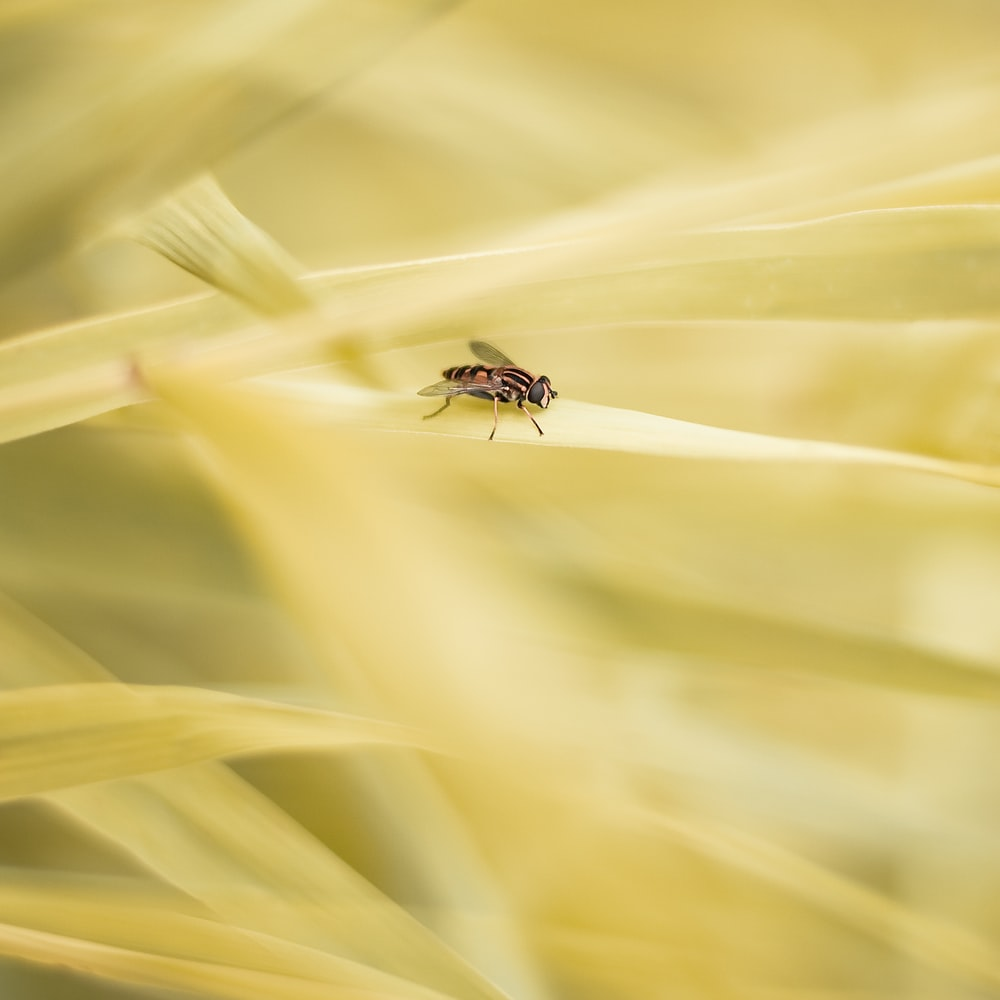 selective focus photo of fly