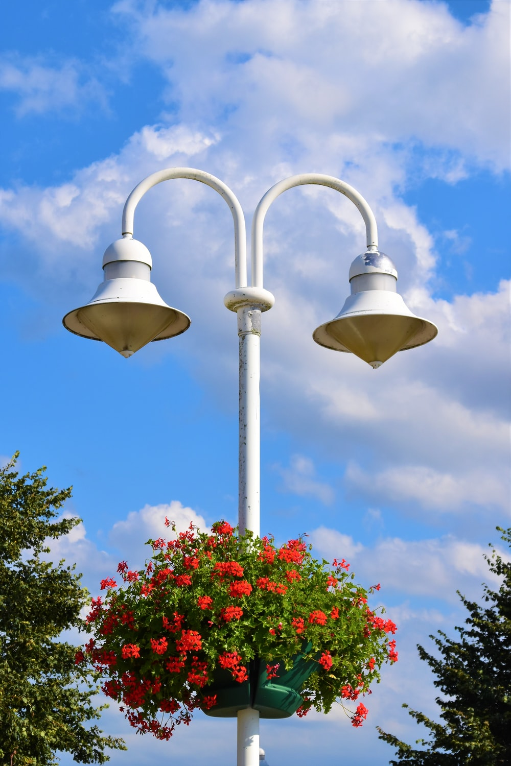 red petaled flowers on white lamp post