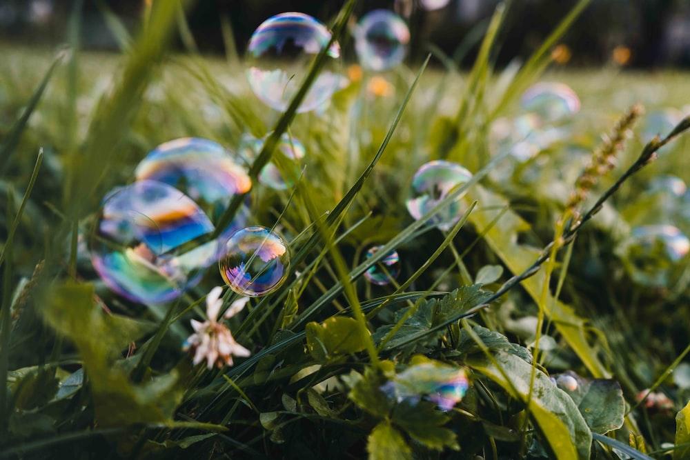 bubbles near plant