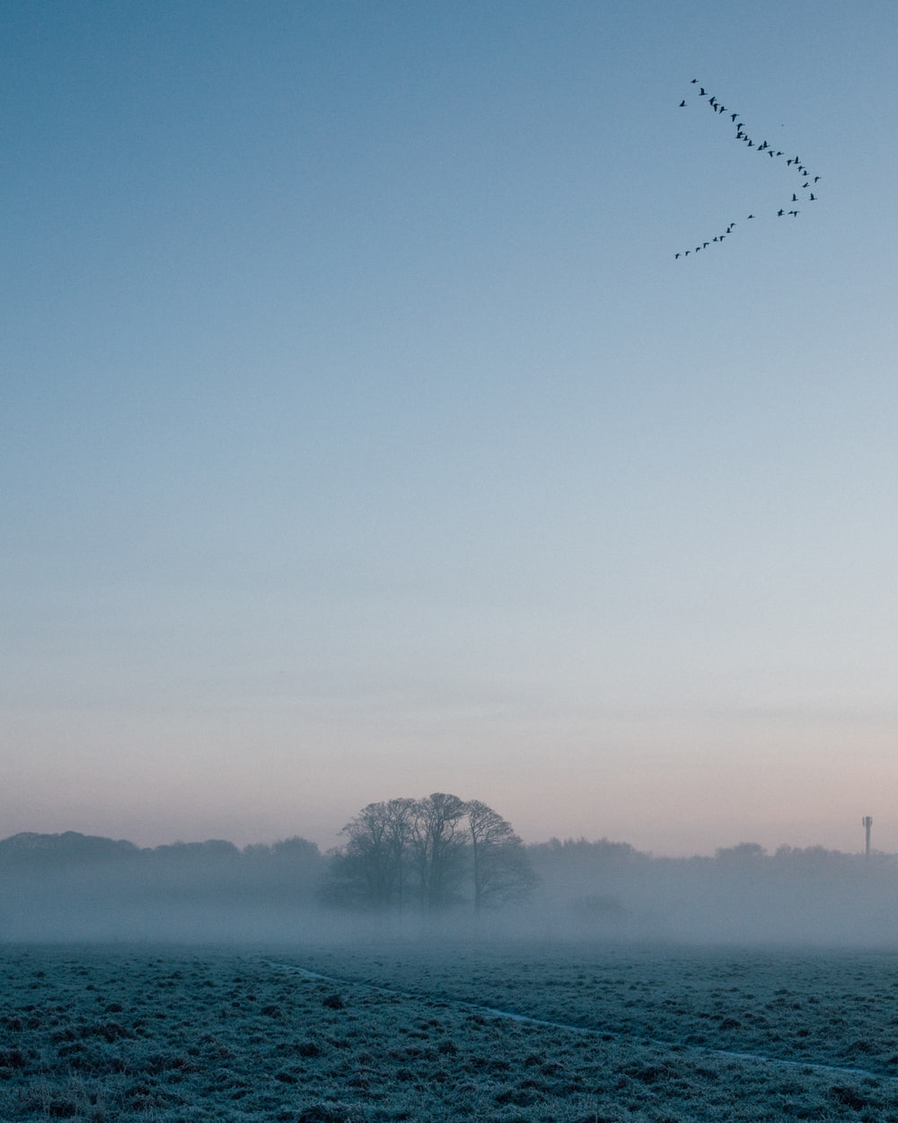 trees under white fogs