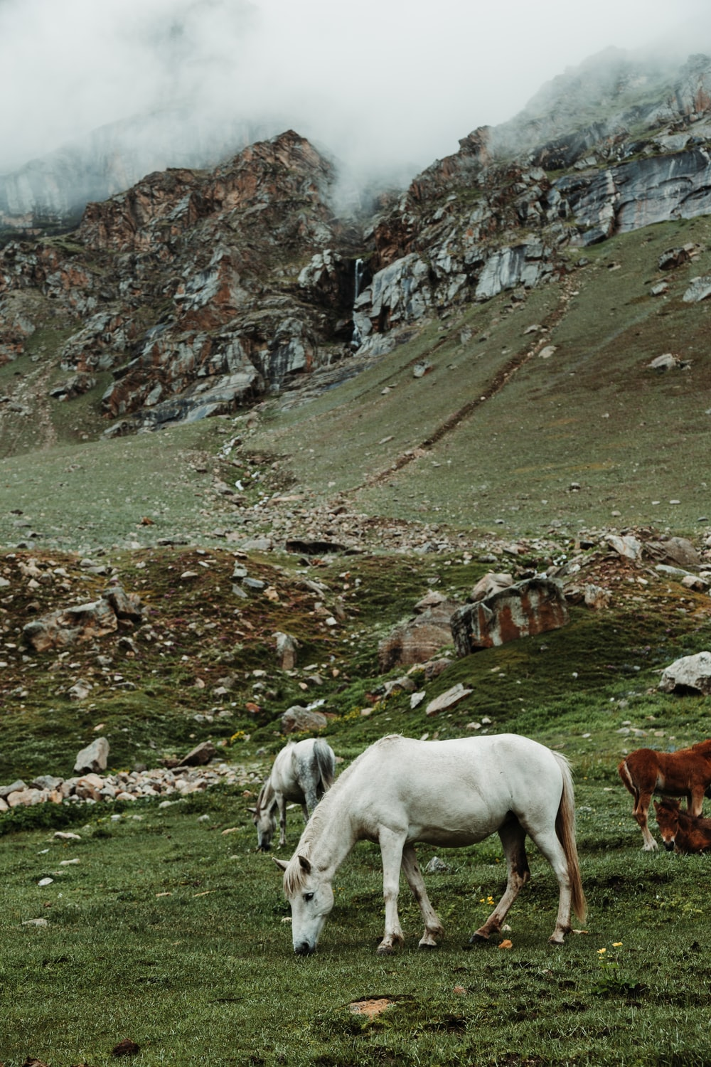 white and brown horses eating grasses in green field viewing mountain under white and gray sky during daytime
