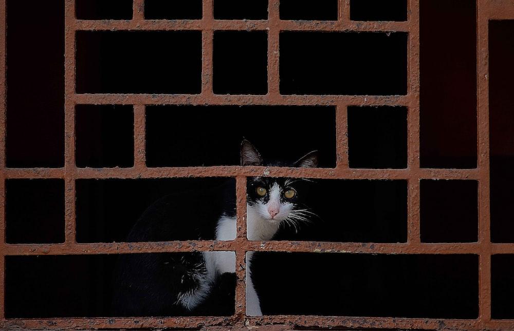tuxedo cat behind brown meta cage