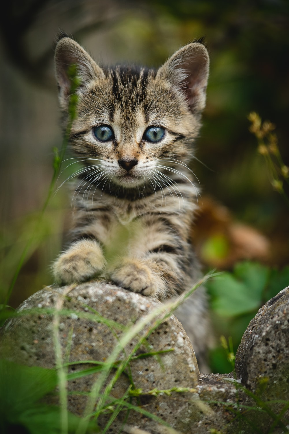 selective focus photography of gray kitten with front pawn on rock