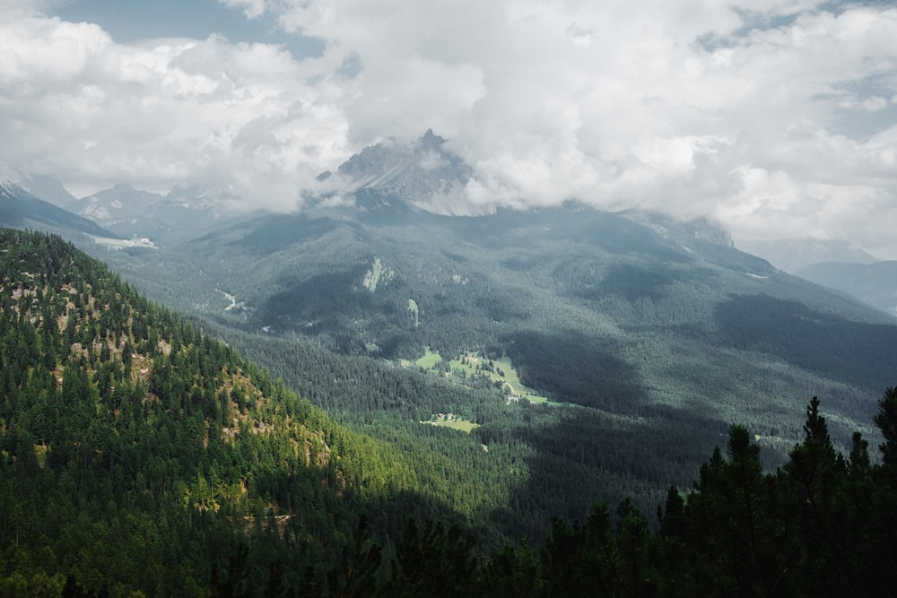 green trees in mountain