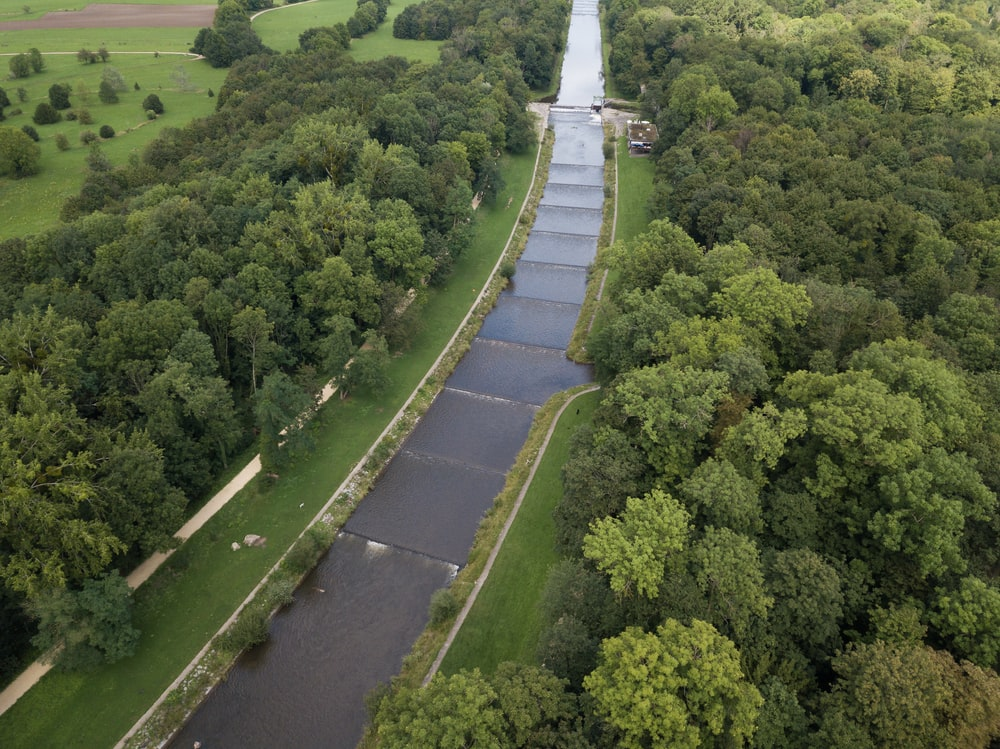 green leaf trees near river