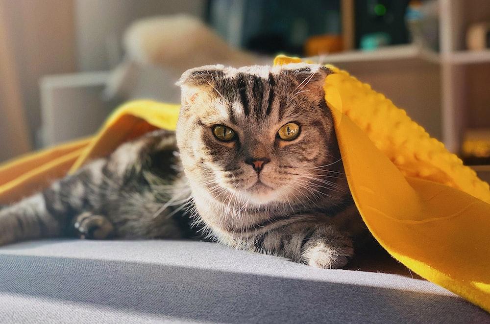 gray tabby cat on gray surface