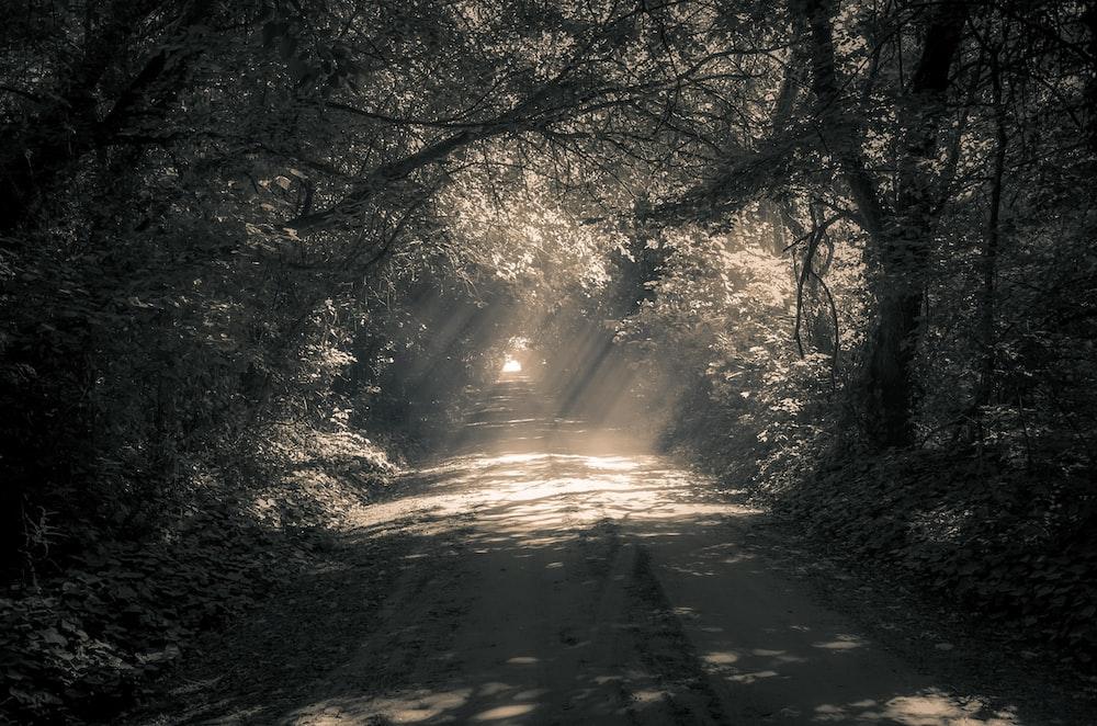 grey pathway between trees during daytime