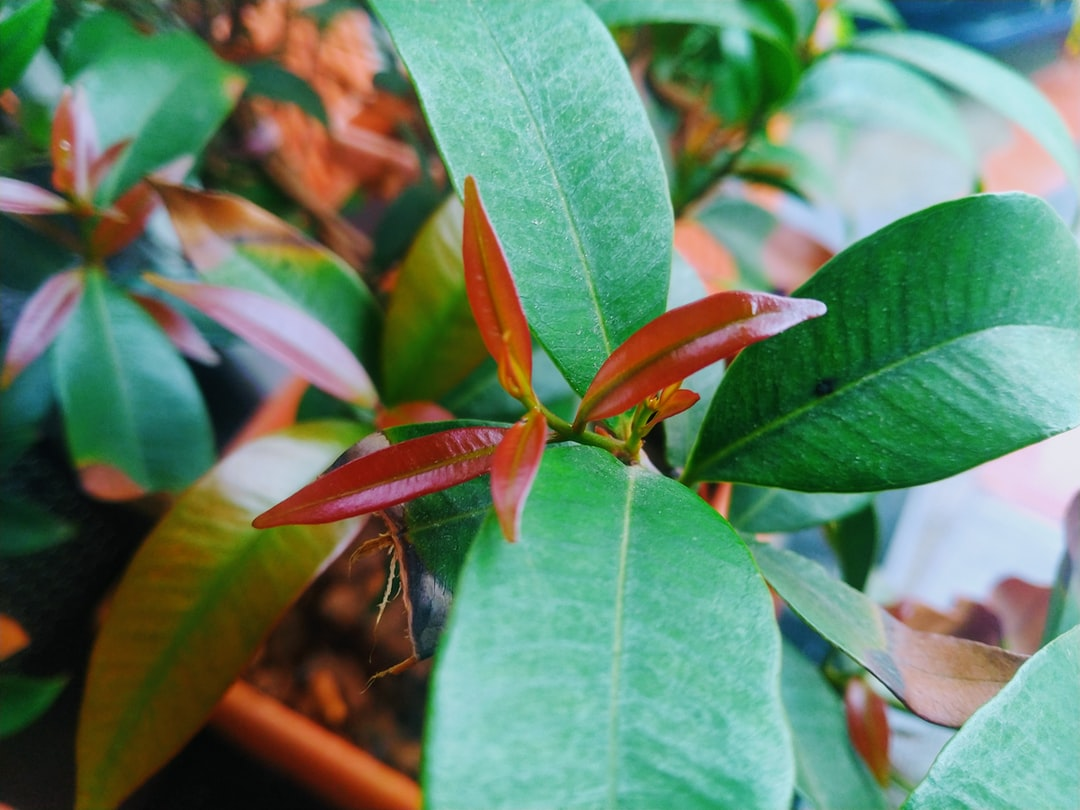 Plucker Leaves