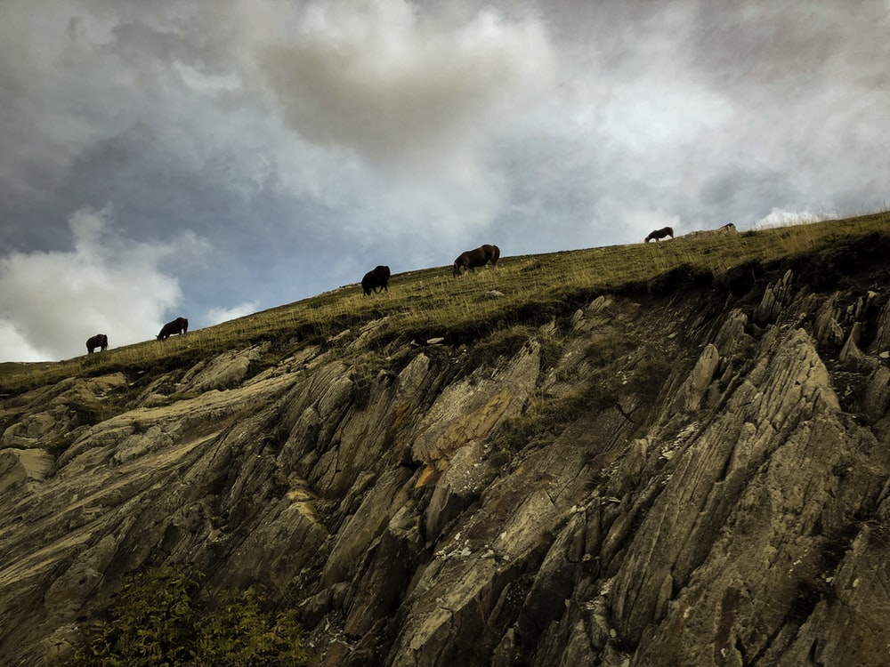 animals on rock cliff