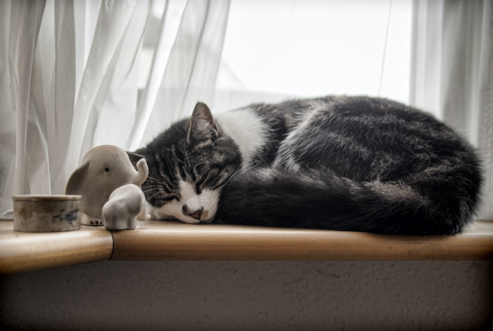 sleeping white and black cat beside window curtain