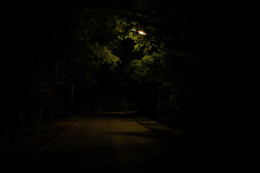 gray concrete road surrounded with tall and green trees during night time