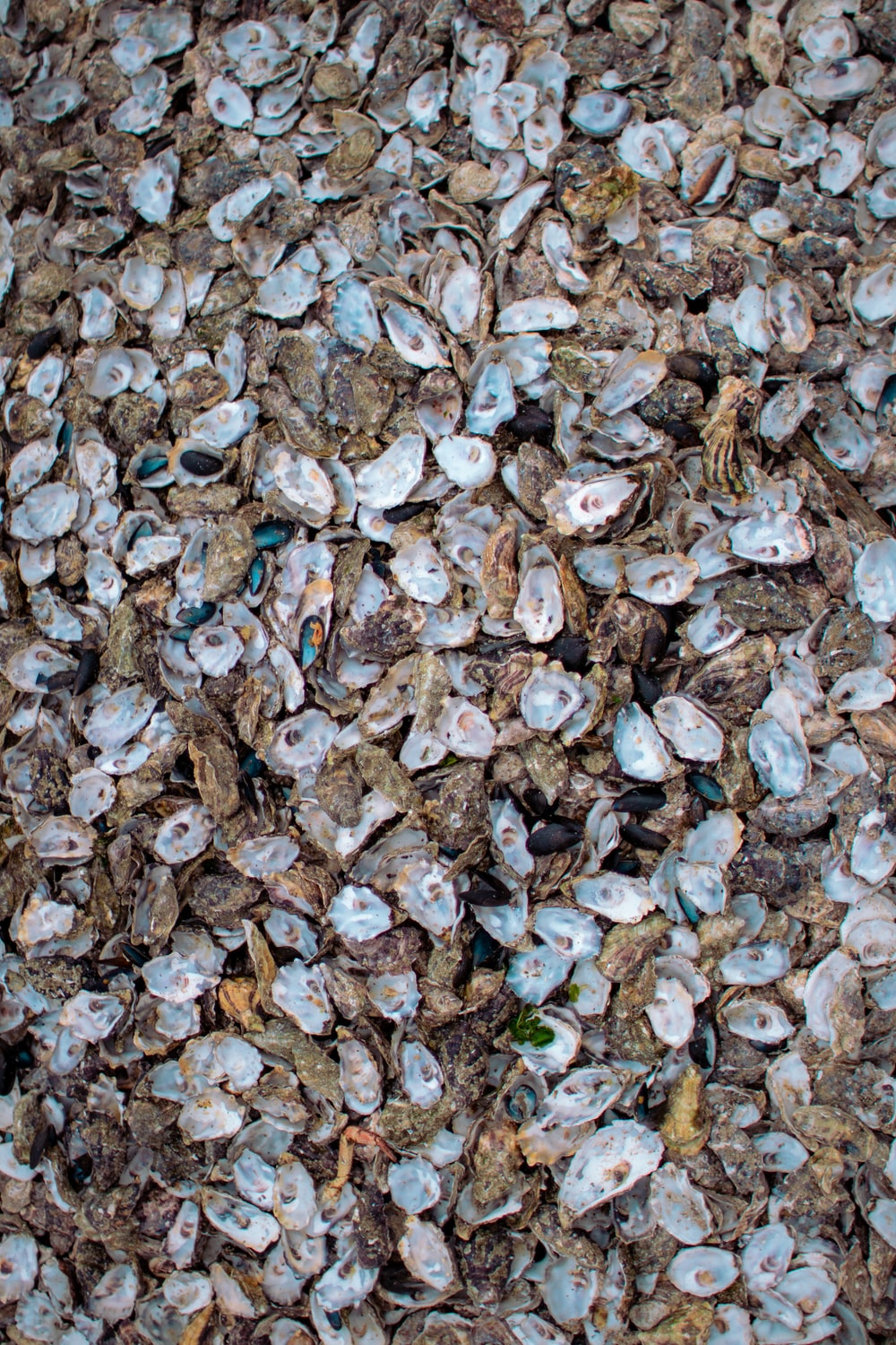 blue and brown leaves on floor