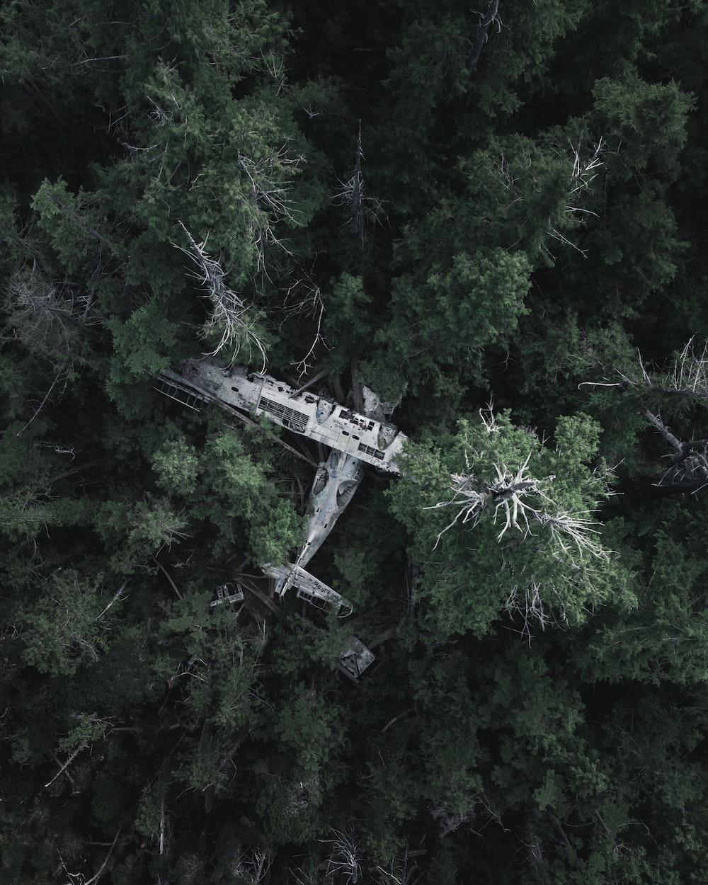 high-angle photo of green trees