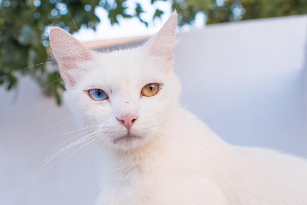 white cat macro photography