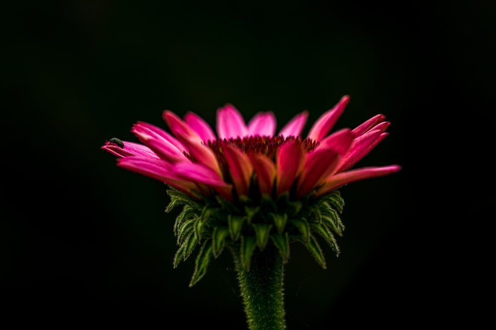 selective-focus photograph of pink petaled flower