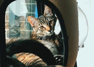 cat inside bed